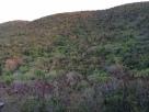 Annaberg, sukkermarker