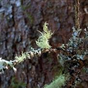 Hope-skogen-mose