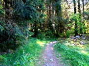 Hope-skogen1