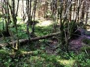 Et morkent tre kunne vært naturens eget avtrede.