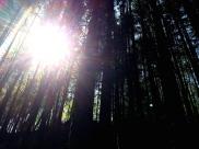 Hope-skogen7