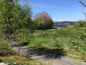 Kjerreveien ned til Hopsvika