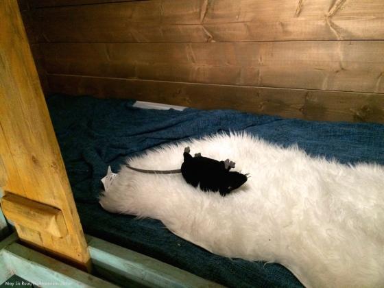 rotte-seng-Schøtstuene-Nattmannensdatter
