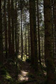 I skogen (Foto: Vibeke K. Seldal)