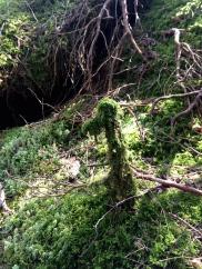 Et søtt lite vesen i skogen (Foto: MLR)