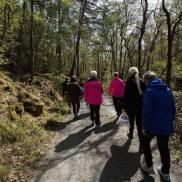 På vei til skogen (Foto: Vibeke K. Seldal)